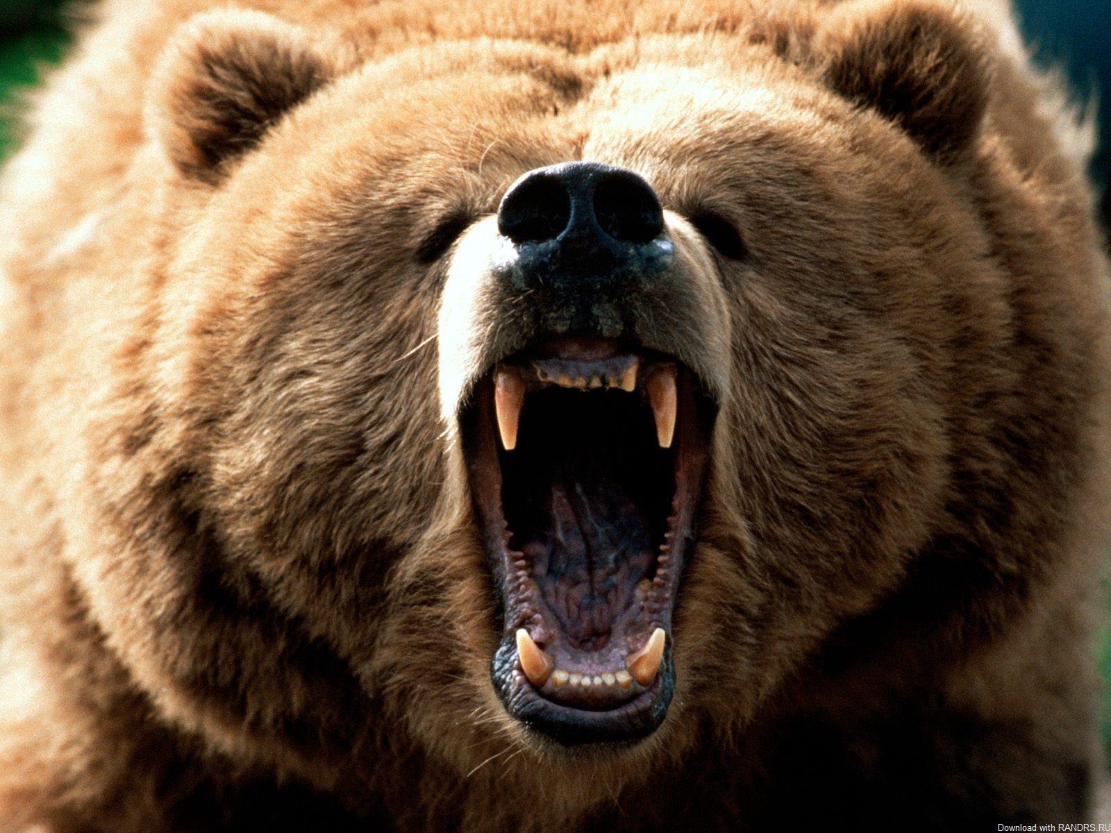 Сказка про медведя и Военную доктрину России