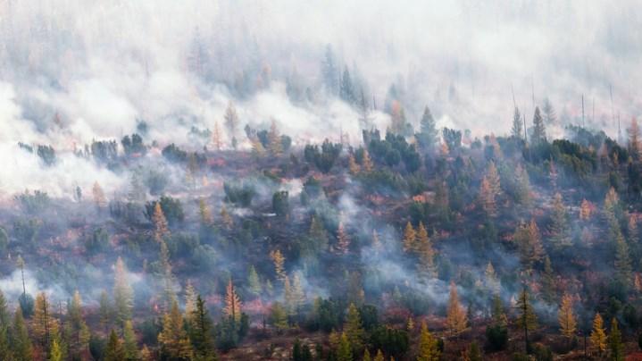 Что происходит? Сибирь и Дальний Восток задыхаются в дыму при бездействии чиновников