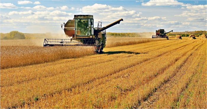 Российская пшеница