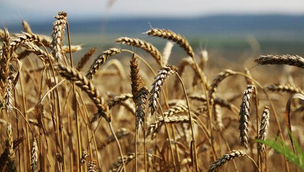 Bloomberg: Россия вытесняет США с рынка зерна