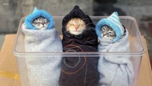 Отопительный сезон по-украински: в Киеве молятся на теплую зиму