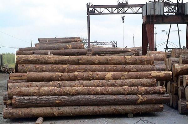 ЕС поставил ультиматум Украине: вырубайте буковые леса или денег не будет