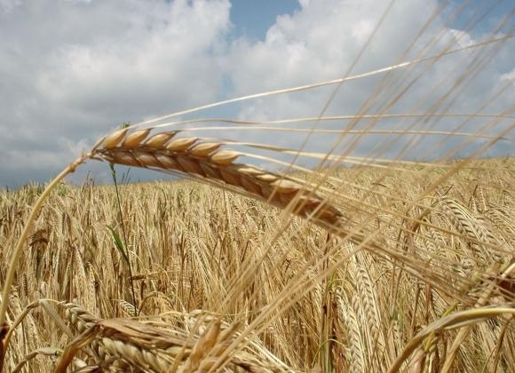 Украину сливают: Польские фермеры требуют остановить импорт зерна
