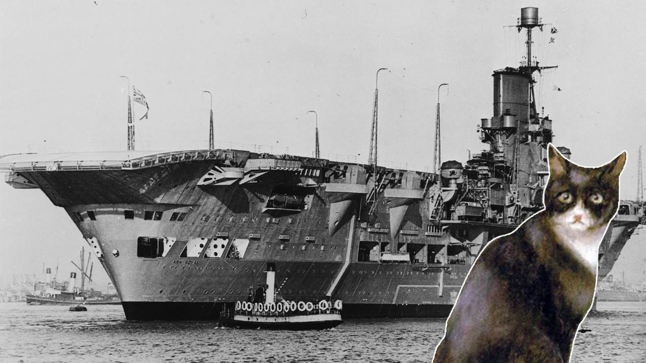 """Непотопляемый Сэм: кот, """"потопивший"""" линкор, три эсминца и авианосец"""
